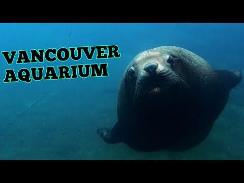 Vancouver Aquarium 2019