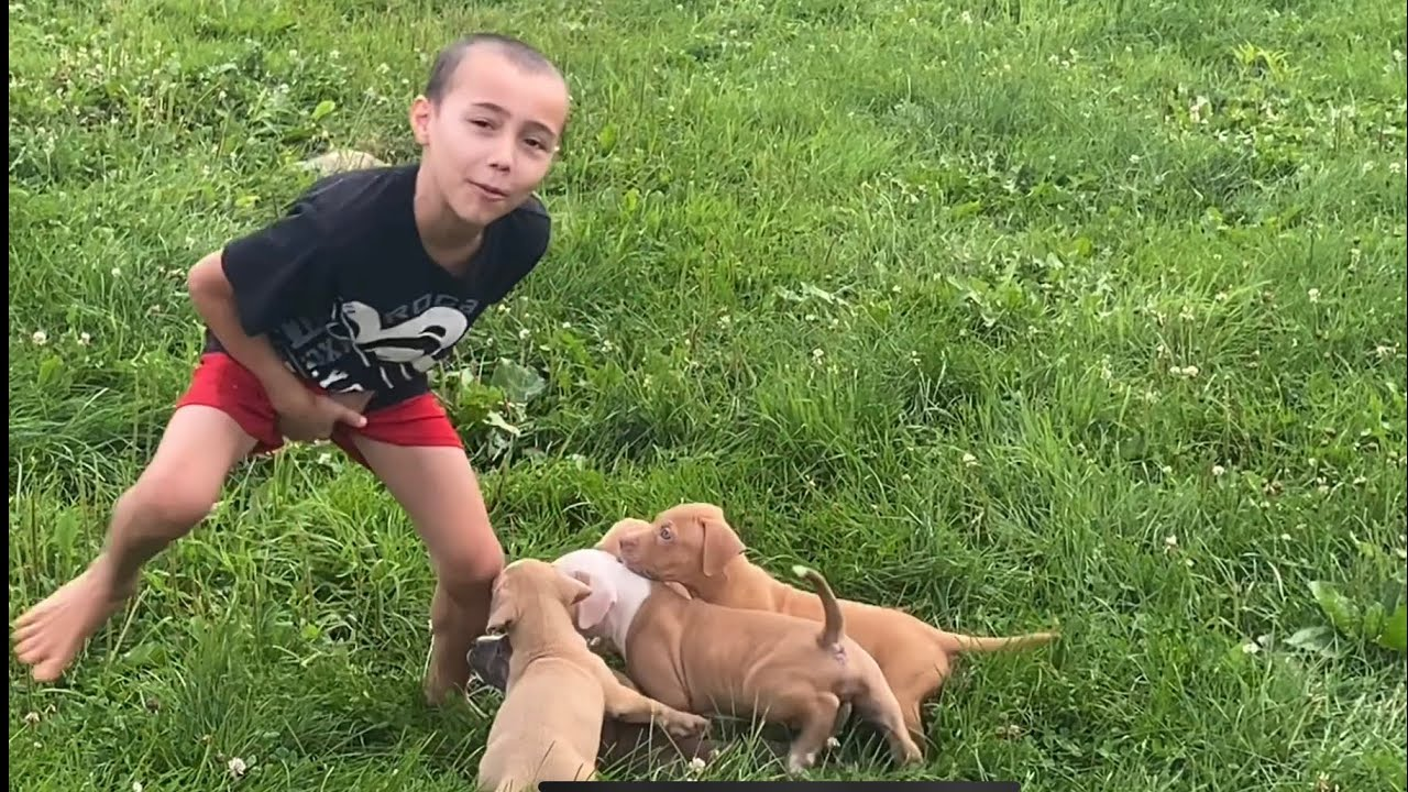Boy gets attacked by pack of puppies and gets bit for real - watch till the end!! 😅🤣