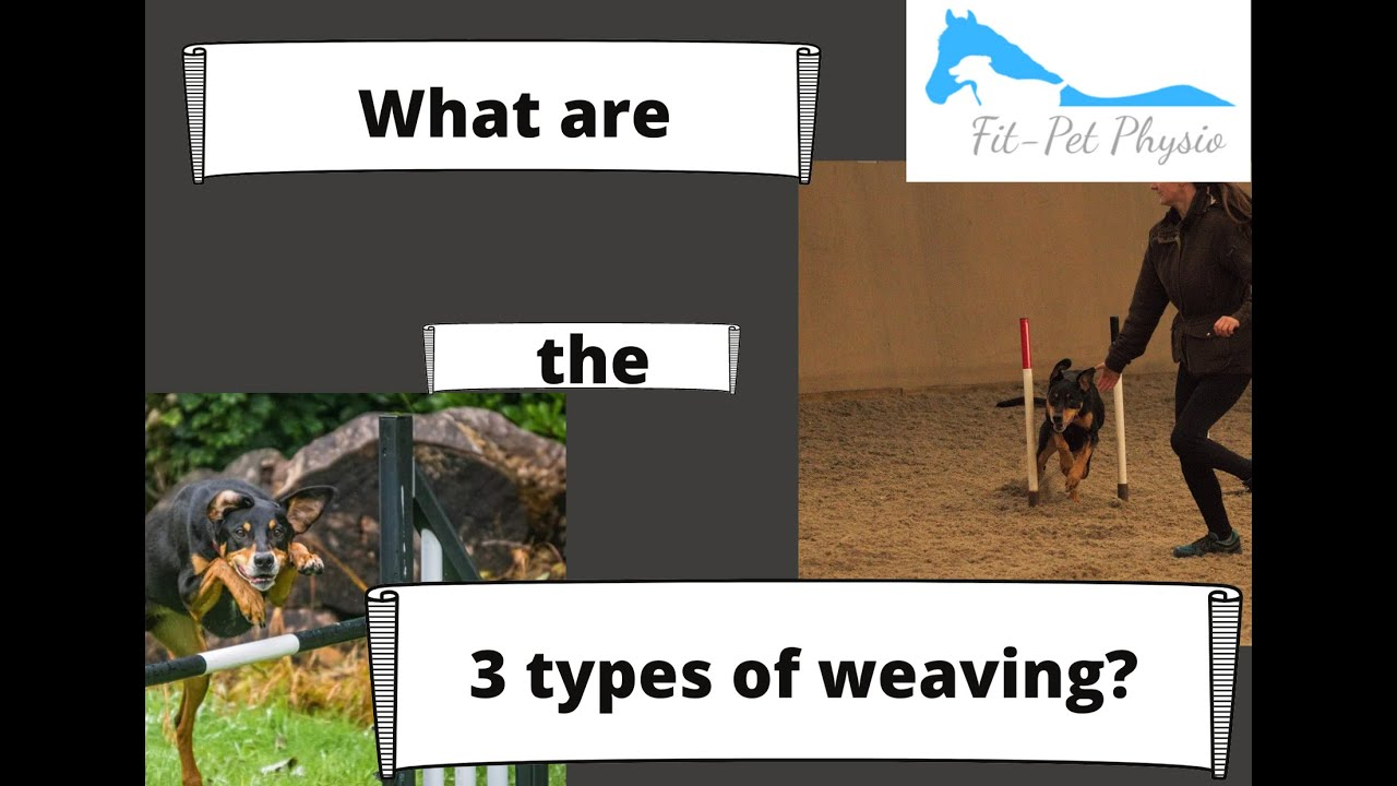 How to start weaving with your dog
