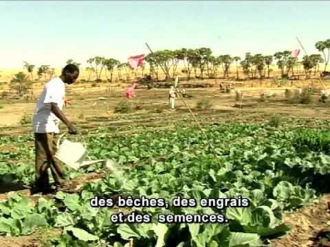 Sécurité alimentaire Afrique de l'Ouest et Centrale