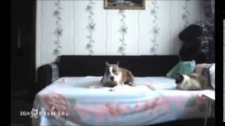 10 βίντεο με σκύλους που συμπεριφέρονται σαν άνθρωποι!
