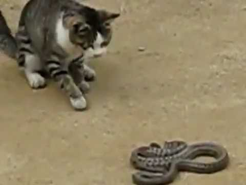 cat win snake...@... חתול מנצח  נחש