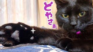 今日から『リビングの女王』は黒猫ナナのようです