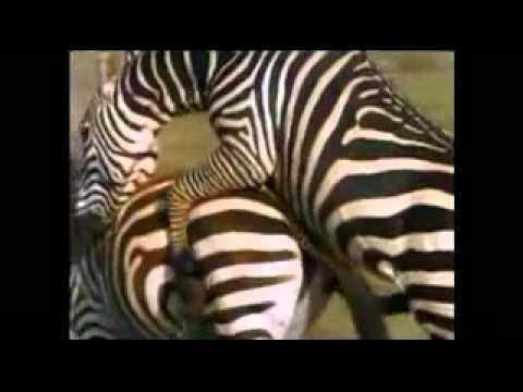 animal sex.FLV