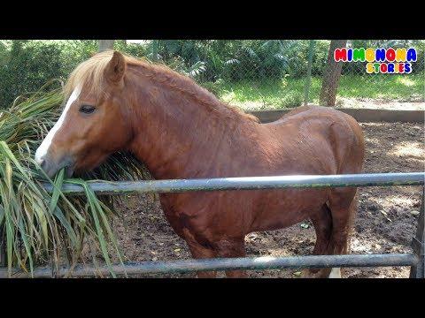 Animales de la Granja🐮🐷🐔 | Videos Infantiles | Mimonona Stories