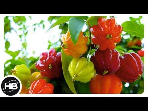 Вопрос: Что относится к кустовым фруктам?