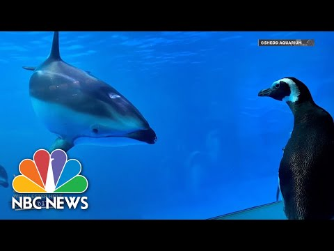 Nightly News: Kids Edition (May 7, 2020) | NBC Nightly News