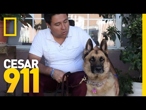 Case File Pupdate: Savannah | Cesar 911