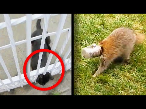 Some of the Craziest Places These Animals Got Stuck