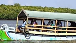Menyusuri Hutan Mangrove Bedul Dengan Perahu Gondang-Gandung (3)