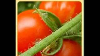 Grow Vegetables in a Grow Box