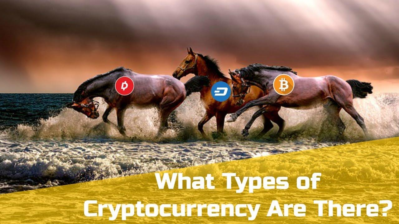 bitcoin whale klubas)