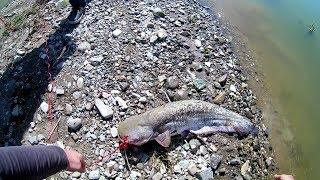 Рыбалка на водохранилище ловля сома летом на донку Видео Full HD