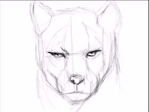 Dibujando Un Puma.mp4 - YouTube