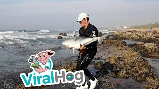 Man Releases Giant Trevally Fish || ViralHog