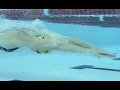 Breast Stroke Drills for Competitive Swimming