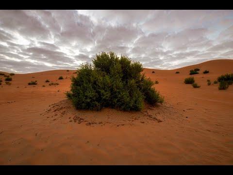 Al Razeen Desert Camping 2021
