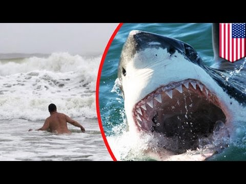 Shark Attack Man Swimming In North Carolina S Outer Banks Is State S 7th Victim Tomonews Youtube