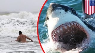 Shark attack: Man swimming in North Carolina's Outer Banks is state's 7th victim - TomoNews