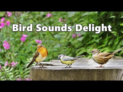 Bird Sounds Delight – One Hour of Beautiful Birds