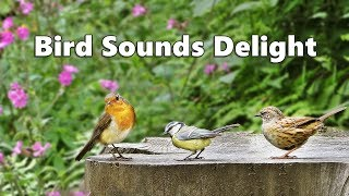 Bird Sounds Delight - One Hour of Beautiful Birds