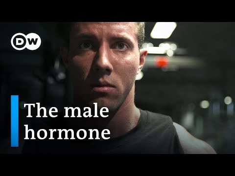 Testosterone  new discoveries about the male hormone | DW Documentary