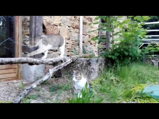 Sommerfrische in der Katzenvilla