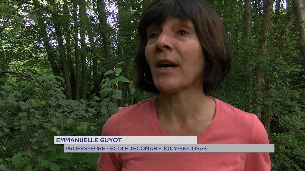 Bonnelles : les chantiers nature participatifs pour préserver la nature