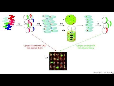 Genomic library screening