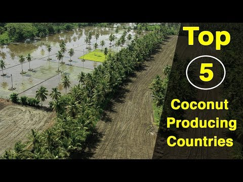 Top 5 Coconut Producing Countries In The World | FactsWacts