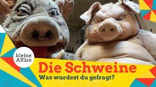 """Michael Hatzius – Die Schweine: """"Was wurdest du gefragt?"""""""
