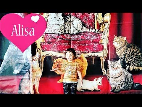 ВЛОГ Алиса на выставке кошек Cat show Little baby Видео для детей Детский канал Алиса