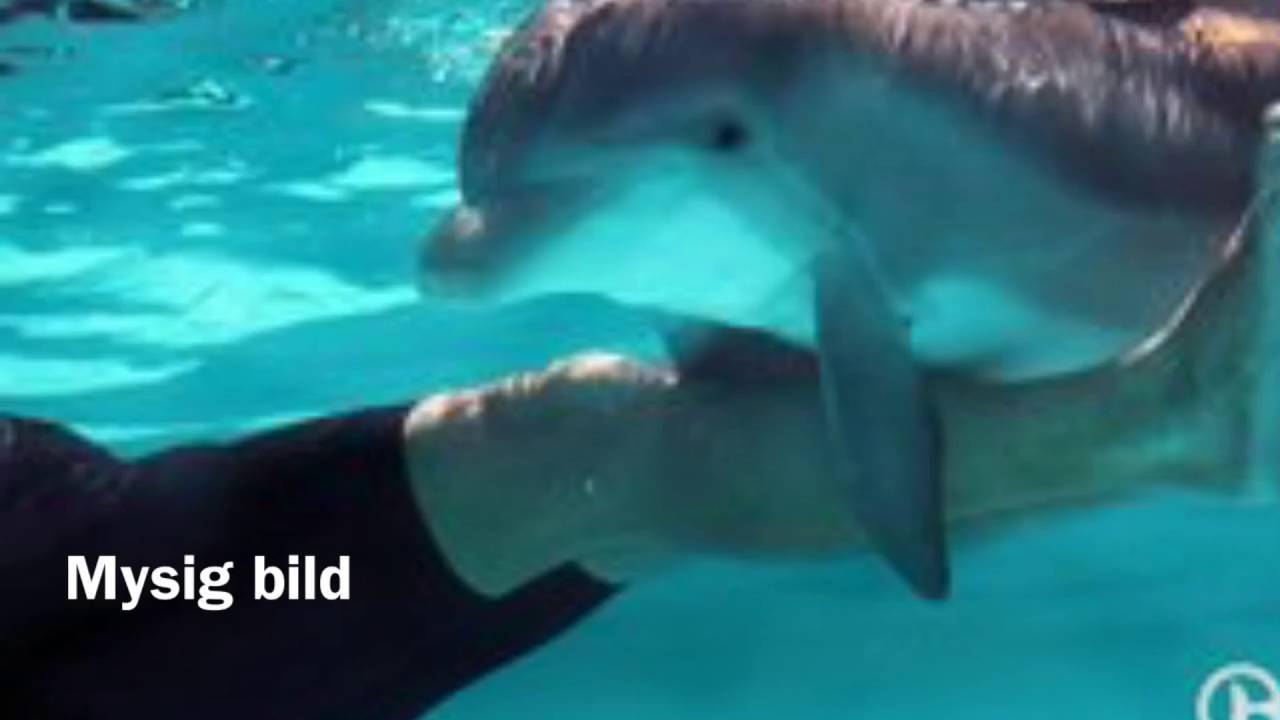 delfin bilder baby  vorlagen zum ausmalen gratis ausdrucken