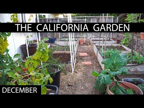 The California Garden In December