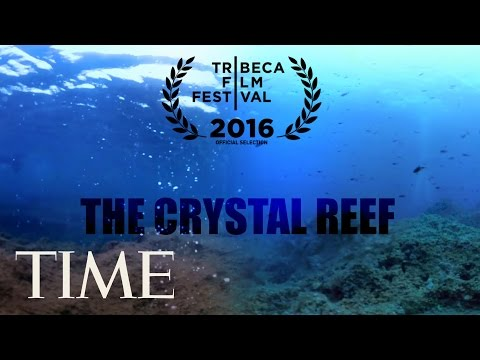 The Crystal Reef: How Climate Change Is Affecting Our Oceans | 360 | TIME