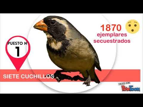 Fauna Silvestre Mendoza
