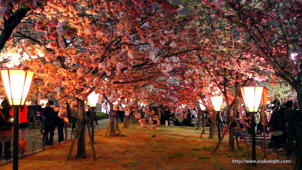 大阪造幣局 桜の通り抜け 夜桜 2012 Japan Mint Cherry Blossom Night Viewing in Osaka ,  YouTube
