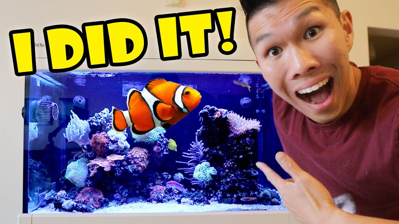 2-000-fish-aquarium-now-thriving-what-happened-life-after-college-ep-608
