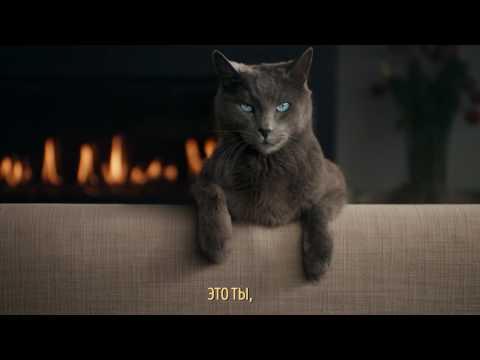 SHEBA®  Караоке кот – «Пять причин»