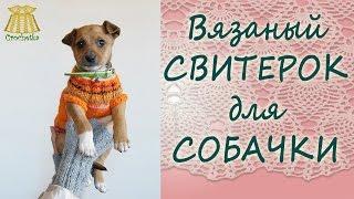 ✿►Вязаный свитерок◄✿ для маленькой собачки-модницы.