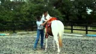 How not to train your horse to be ridden