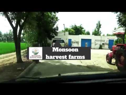 Short movie:  Monsoon Harvest Farms by Rishabh Gurwara