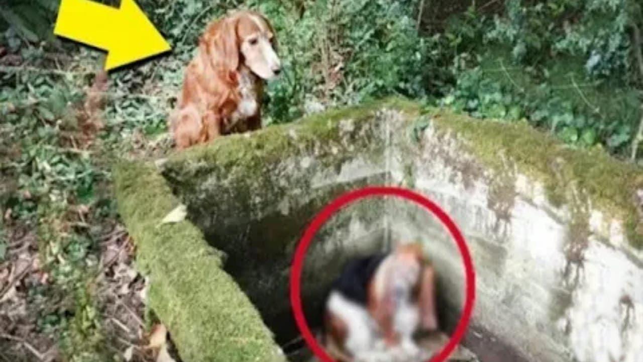 كان هذا الكلب يذهب للغابة كل يوم.. بعد ايام قرر صاحبه ان يتبعه ليكتشف.......!!