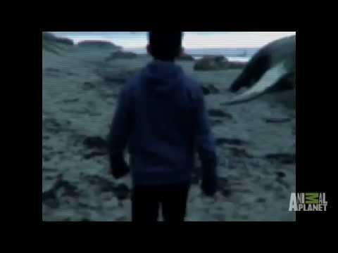 Niños Encuentran Sirena En Varamiento De Ballenas- Mermaids