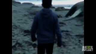 Niños Encuentran Sirena En Varamiento D...
