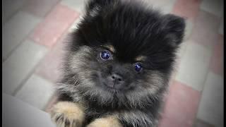 Самые красивые животные в мире☆.