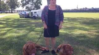 3rd Breed Interview - Dogue De Bordeaux