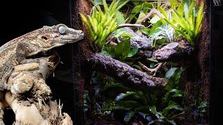 Bioactive Gargoyle Gecko Vivarium