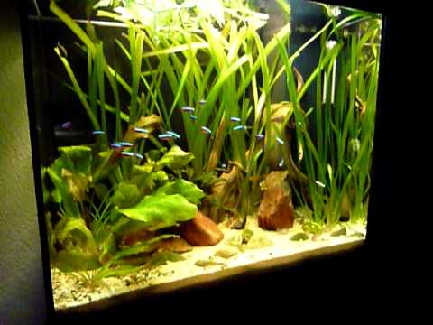 amazonas aquarium 120 liter youtube. Black Bedroom Furniture Sets. Home Design Ideas