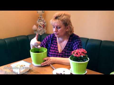 Ранункулюс - лютик. Посадка, выращивание, уход. Цветы